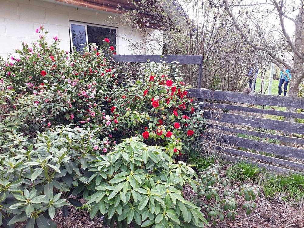 Spring gardens in Otago on our Spring Tour
