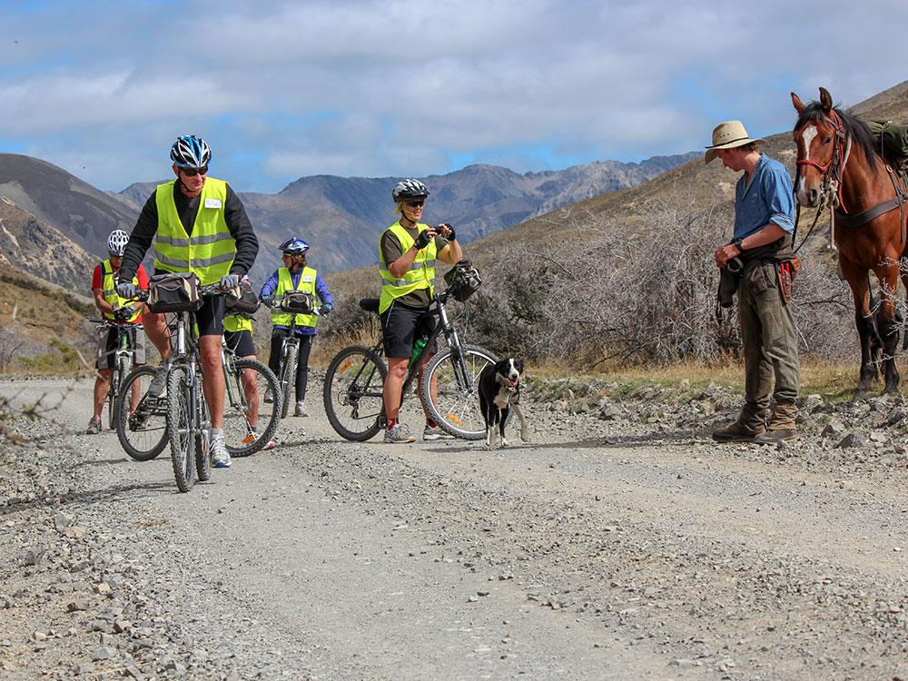 Cycle group with shepherd on road