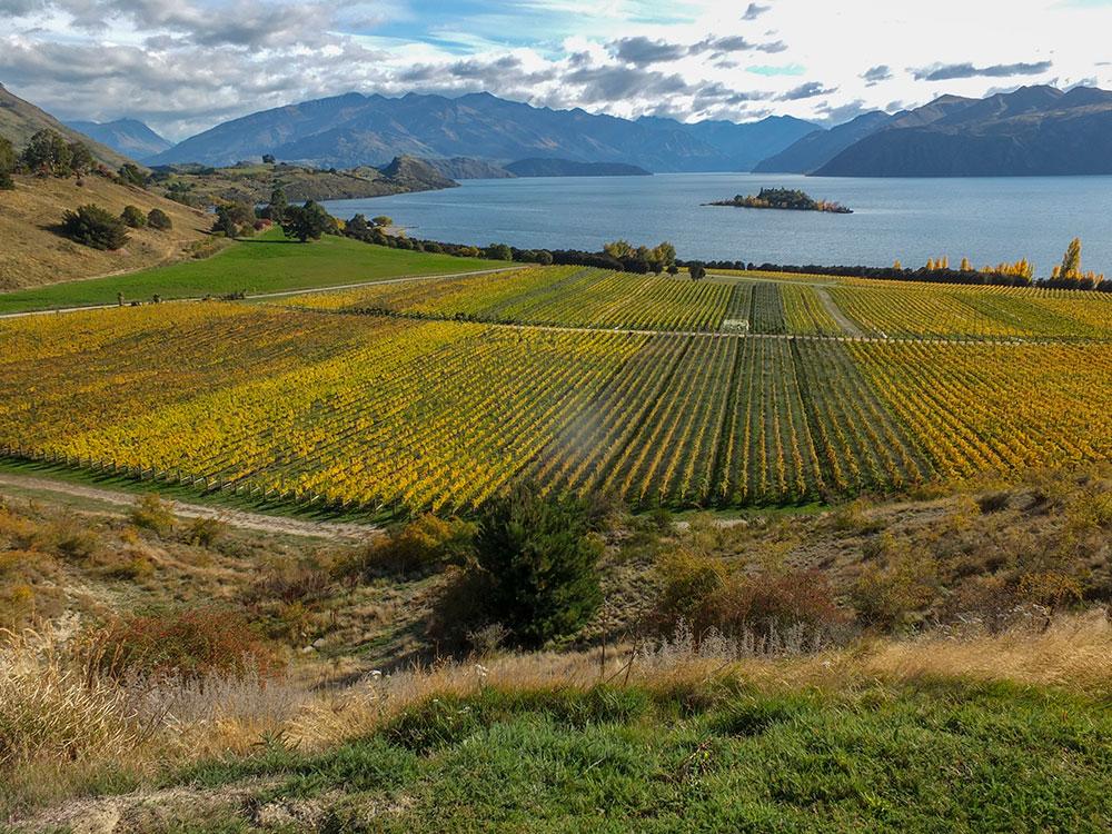 Central Otago autumn small group tour