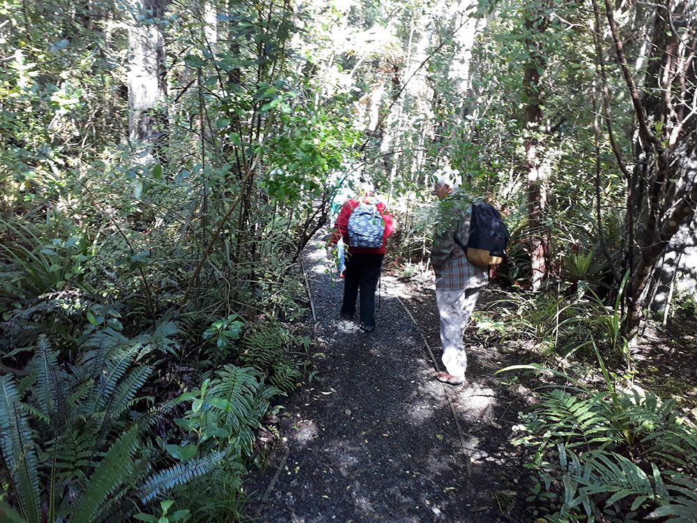 Guided tour bush walking in Kaikoura